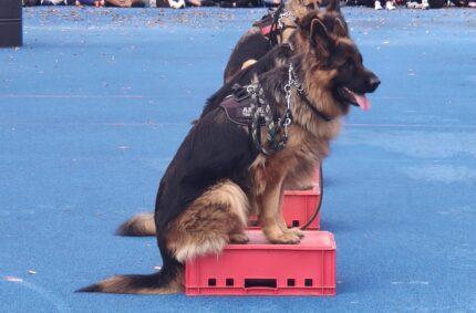 Szkolenie psów